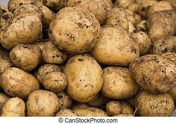 Fresh dug out potatoes