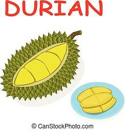 Fresh Durian fruit isolated on white vector design