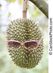 Fresh durian fruit wearing sunglasses on trees. - Fresh...