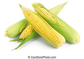Fresh ear of corn with green leaves isolated on white background