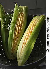 Fresh ears of corn - Whole fresh raw corn on the cob with ...