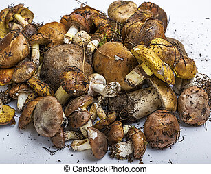 fresh edible forest mushrooms