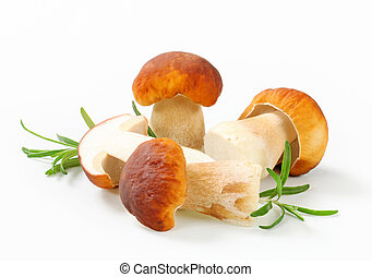 Fresh edible mushroom - Studio shot of fresh edible mushroom