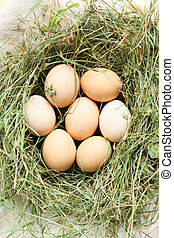 fresh eggs in a nest of hay, top view
