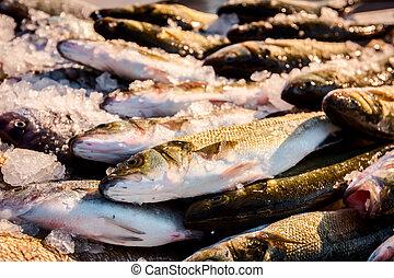 Fresh European seabass, Mullet, fish on ice at outdoor fish...