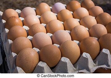 Fresh farm egg. Chicken Egg