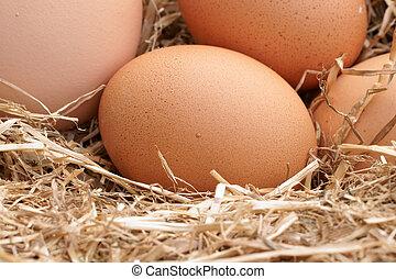 Fresh farm eggs - Freshly laid free range hens eggs in a bed...