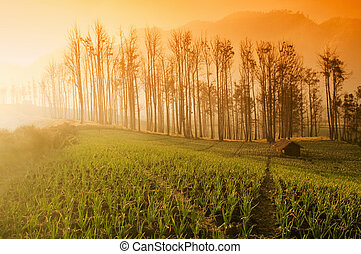 Fresh Farmland Sunrise in Asia Country.