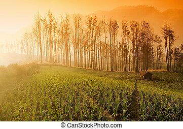 Fresh Farmland Sunrise in Asia Country.