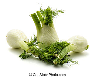 Fresh fennel isolated on white - Three florence fennel ...