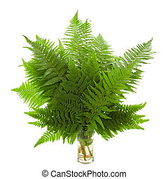 Fresh Fern Green leaves isolated on white background