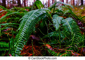 fresh fern on the forest floor in the winter