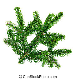 Studio closeup of a fresh fir twig, isolated on white background