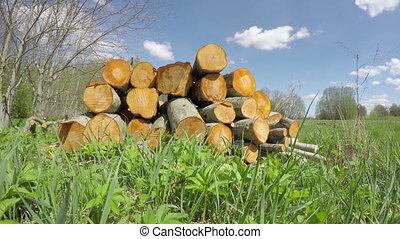 fresh firewood stack, Timelapse 4K - fresh spring firewood...