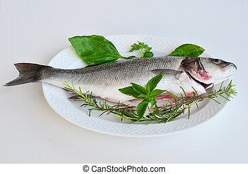 Fresh fish 4