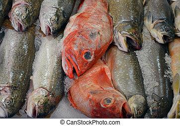 Fresh fish at the market