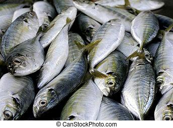 fish - fresh fish at the market