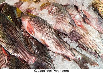 Fresh fish at the market, Thailand