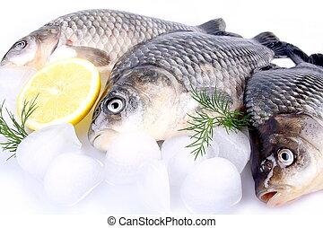 Fresh fish carp on a white background and ice and lemon
