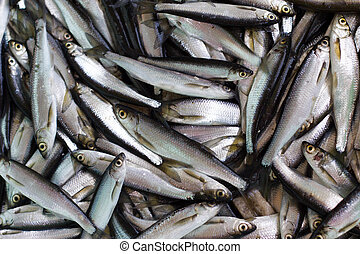 Fresh fish catch.