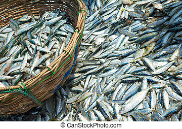 Fresh fish catch in fishing net on beach