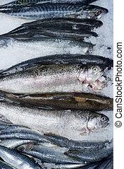 Fresh Fish Catch on Ice