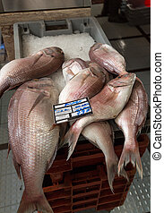 Fresh fish catch on sale at local fish market