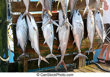 Fresh Fish - Freshly caught fish hang on pegs for the proud...