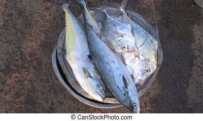 fresh fish in asia market, India