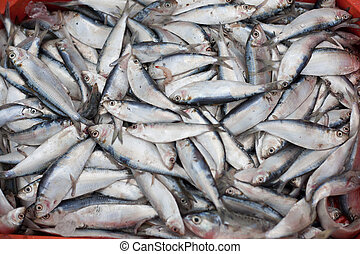 fresh fish in box and fisherman