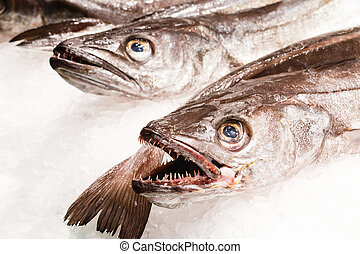 Fresh fish in market Barcelona
