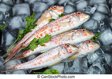 Fresh fish (Mullus barbatus ponticus) laid out on pieces of ice with herbs