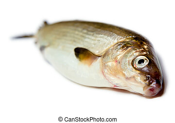 fish on a white background. herring