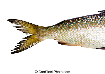 fish on a white background. tail herring - fresh fish on a...
