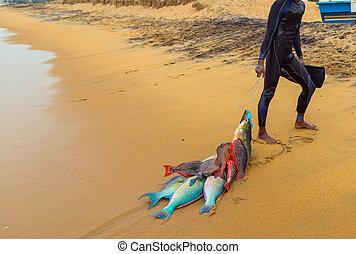 Fresh fish on beach by fishermen