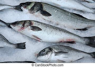 Fresh fish on crushed ice.