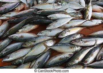 Fresh fish on market counter