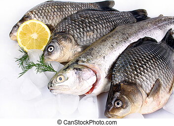 Fresh fish on white background with ice and lemon