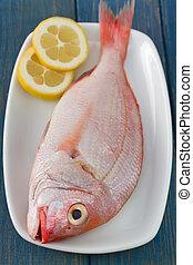 fresh fish on white dish
