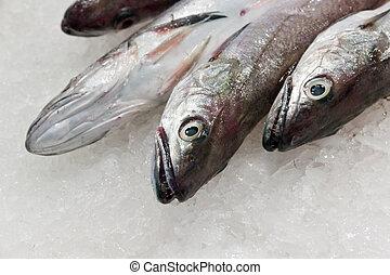 fresh fish in ice at the market  Boqueria