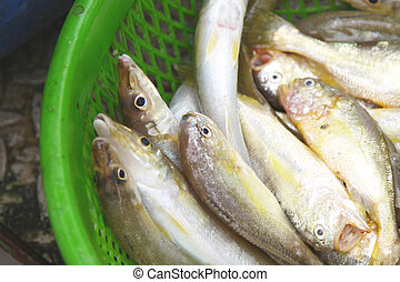 Fresh fishes in market