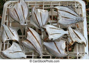 flatfish - fresh flatfish drying in the sun