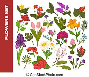 Fresh flowers colorful flat vector poster on white