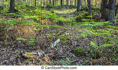 Fresh Forest in Spring