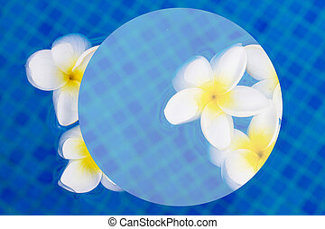 fresh frangipani flowers on blue water