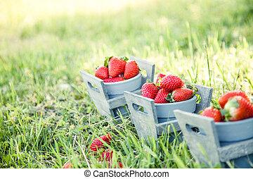 Strawberries in grass