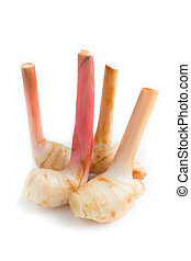 galangal - Fresh galangal root isolated on white background
