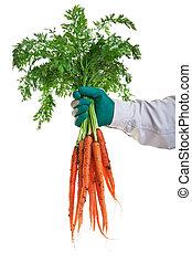 Fresh Garden Carrots