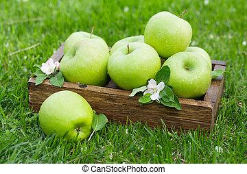 Fresh garden green apples in box