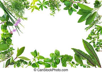 Fresh garden herbs isolated on white background